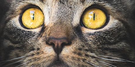 14a Assemblea ordinaria Associazione Amici Animali Ticino - AAT biglietti
