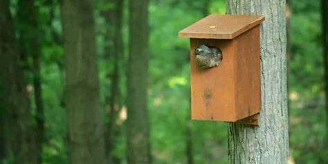 Nest Box & Seed Feeders Make & Take