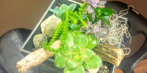 Succulent & Cacti Planter Pot