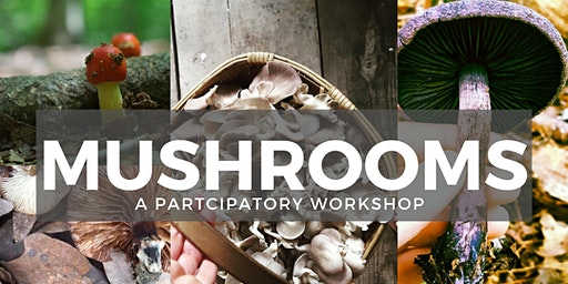 Mushroom Magic: Inoculation and Foraging Walk