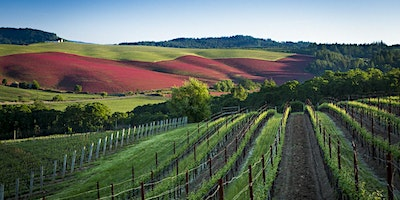 Winemakers Lunch with Joe and Pat Campbell - Elk Cove Vineyards