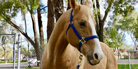 Lunch and Learn: An Equine Experiential tickets