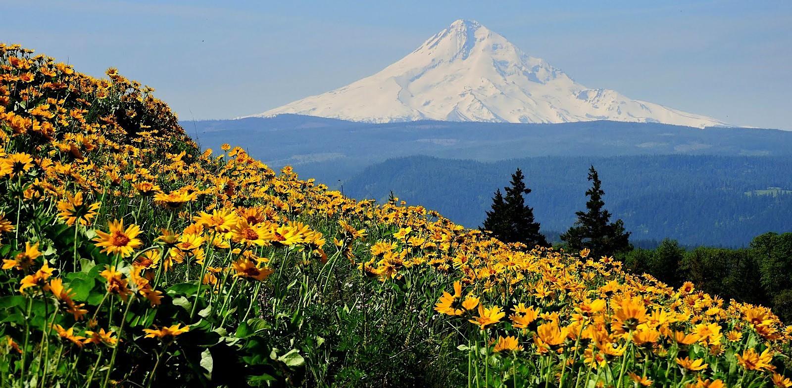 Rowena Plateau Wildflower Walk, OR