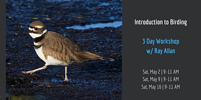 Introduction to Birding | WORKSHOP |