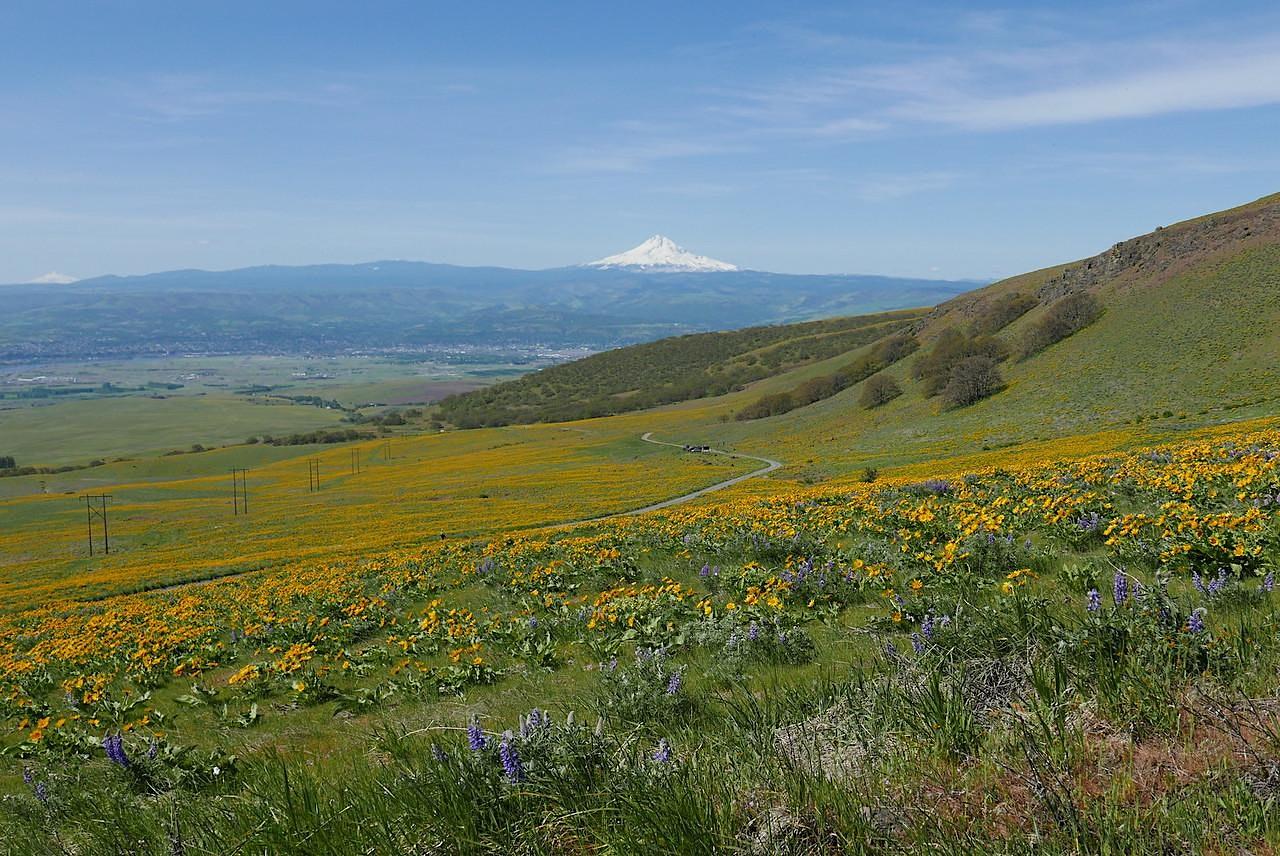 Stacker Butte Wildflowers, WA