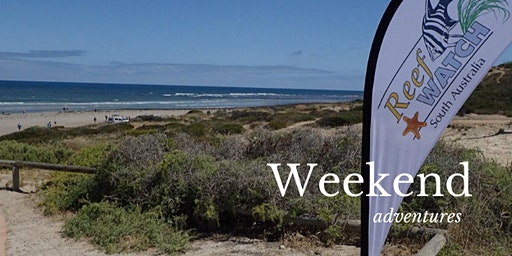 Adelaide Reef Rock Pools - Guided Tour - Aldinga Beach