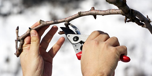 Tree pruning 101 - free workshop