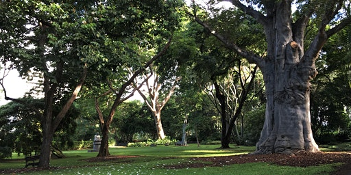 Green Walk - Foster Botanical Garden (Honolulu, Oʻahu)