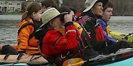 Heron Viewing by Kayak tickets