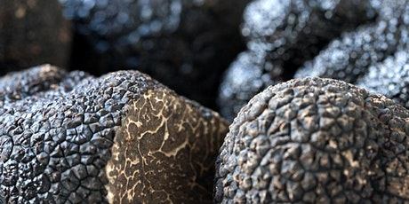 Introduction to Truffle and Hazelnut Growing - Canberra ACT tickets