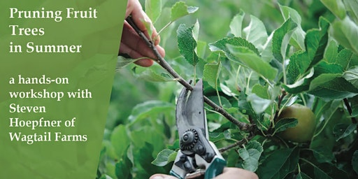 Prune Fruit Trees in Summer - learn how and why in a hands on workshop