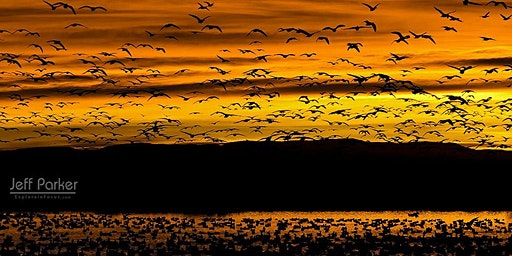 Bosque del Apache ~ Photo Tour ~ 2020