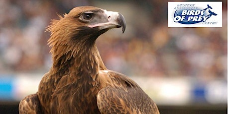 April School Holidays – Up Close with Birds of Prey @ Clarkson Library tickets