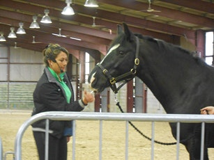 Workshop 1(of 3) Horse Behaviour and Learning Foundation Day.  tickets