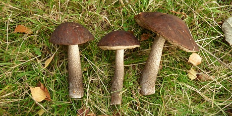 Fungi Foray tickets