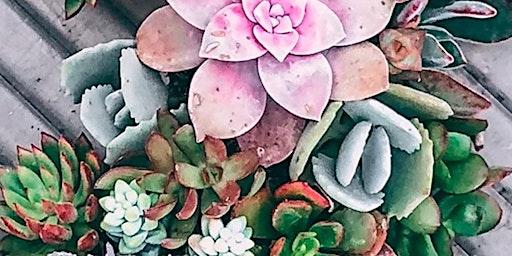 Succulent Arrangement Workshop