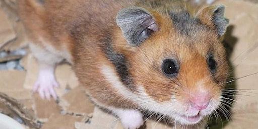 Glasgow Hamster Show