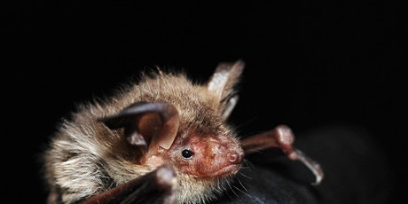 Cancelled: Let's Go Batty. Bat Talk and Walk - Nature Discovery Centre tickets