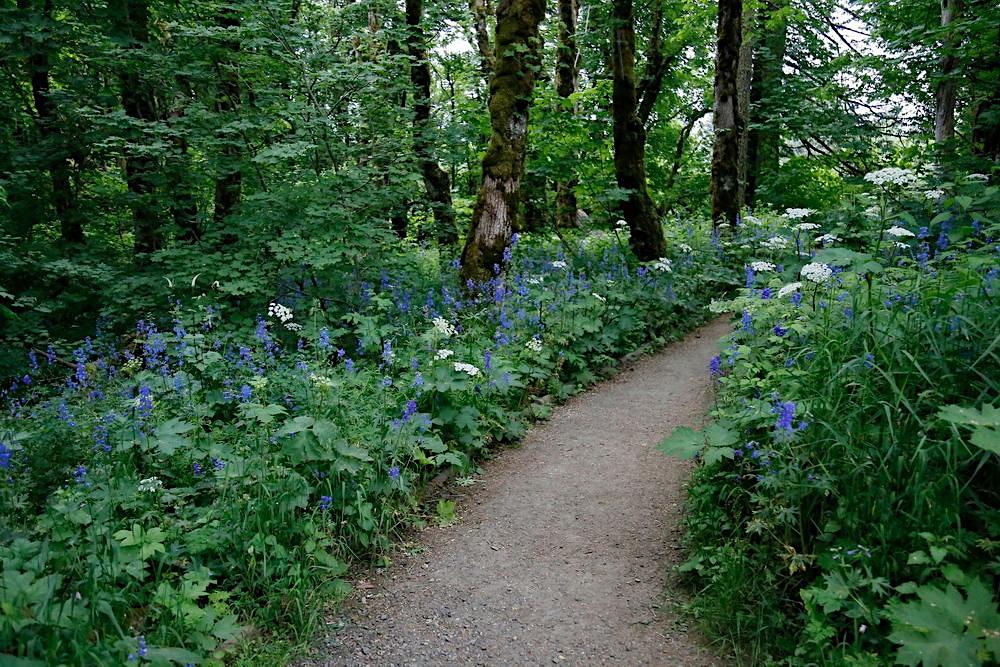 Cape Horn Upper Trail Wildflowers, WA