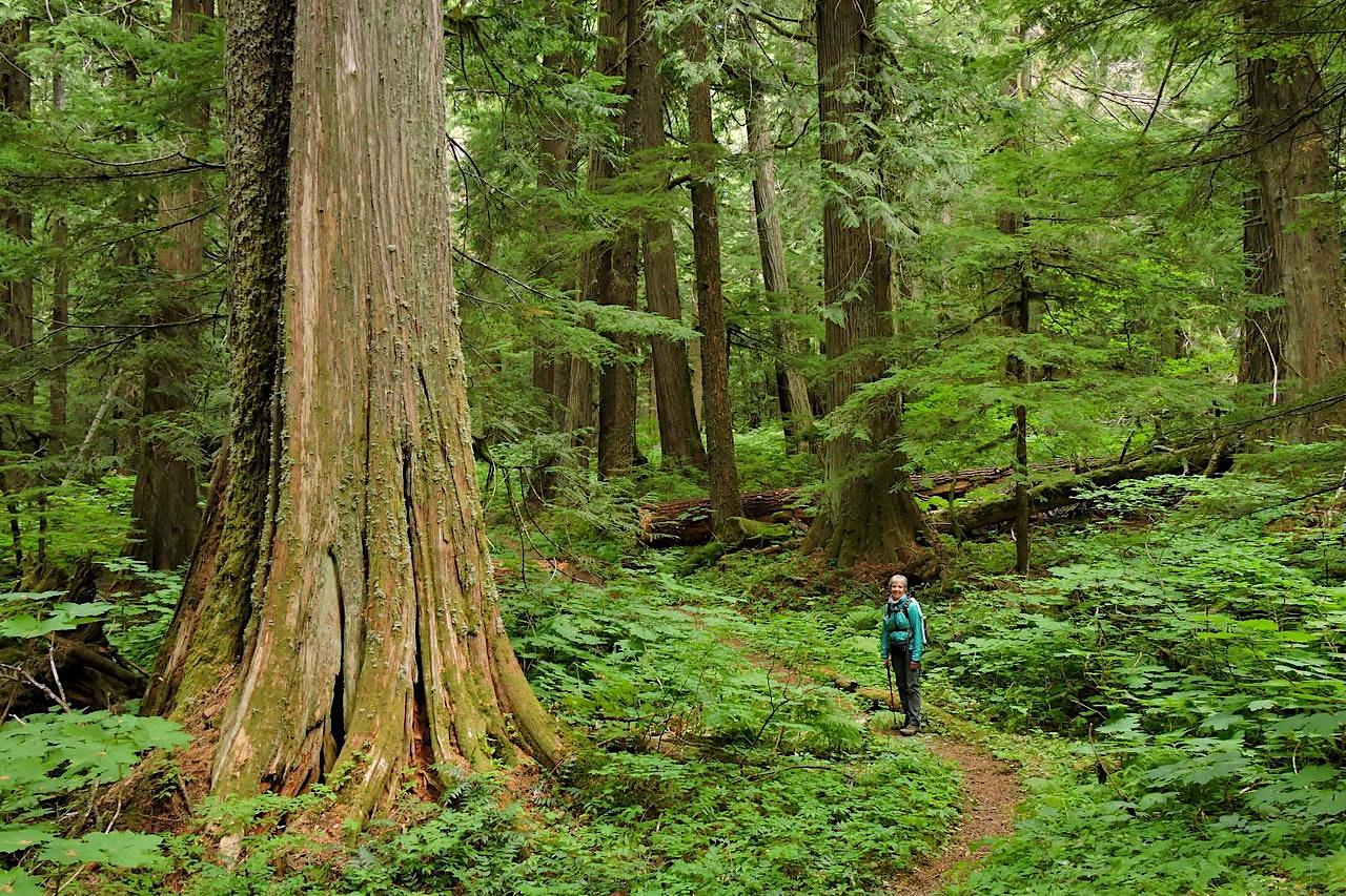 Herman Creek to Cedar Swamp Camp, OR