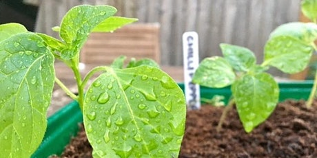 Urban Vegetable Growing [14.30] tickets