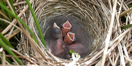 *Postponed* Making baby birds: nest finding and recording tickets