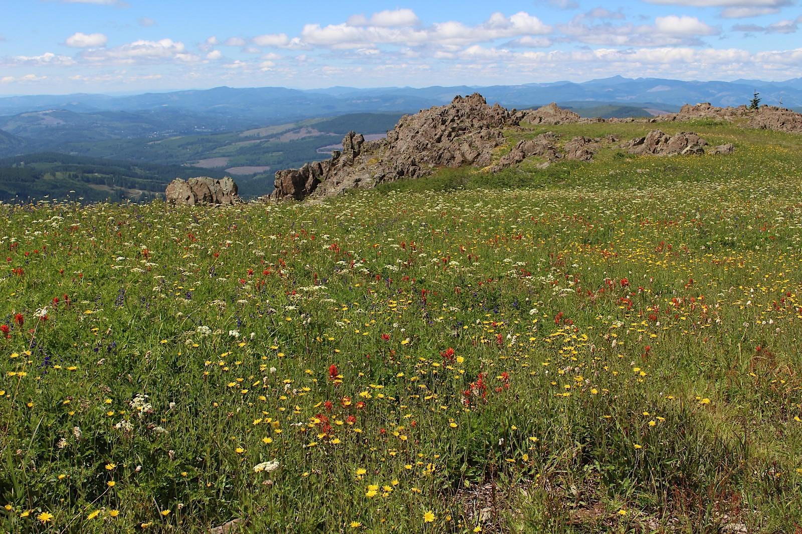 Silver Star Mountain & Ed's Trail, WA