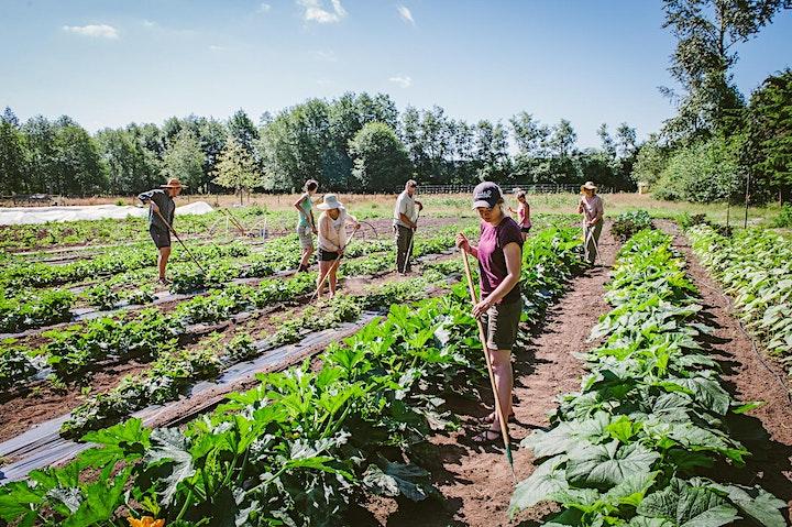 Growers to Sowers: A Rocha Farm image