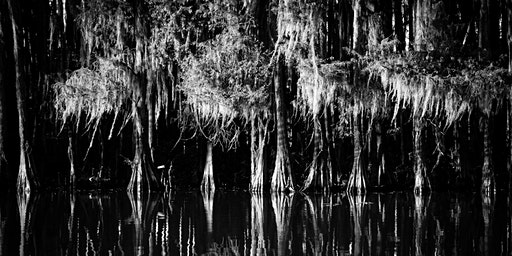 Caddo Lake Photo Cruise!