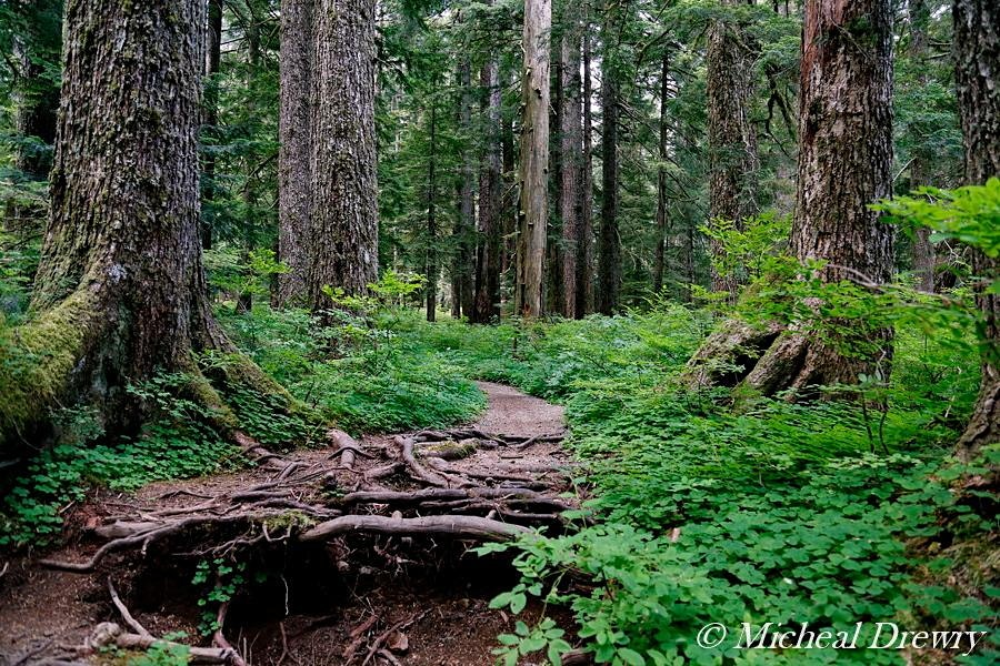 Exploring Larch Mountain, Part 2: Headwaters of Multnomah & Oneonta Creeks