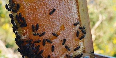 Beekeeping: Honey Extraction & Hive Management