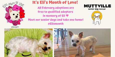 Meet the love of your life at Muttville Senior Dog Rescue this weekend ♥ tickets