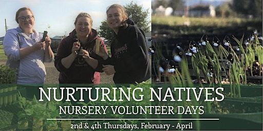 Nurturing Natives: Nursery Volunteer Day