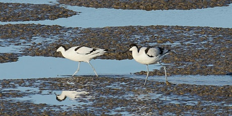 Guided birdwatching walk – Rainham Marshes tickets