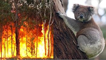 Caroma Bushfire Fundraiser
