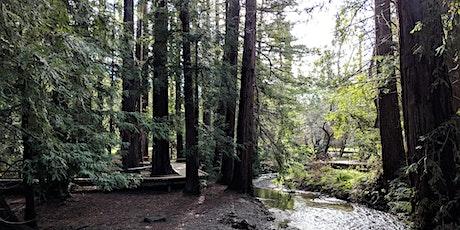 """Volunteer Outdoors in Los Altos: """"Sorrel Saturdays"""" at Redwood Grove tickets"""