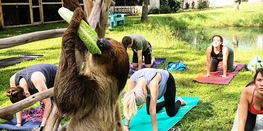 Animal Yoga at Amazing Animals Inc
