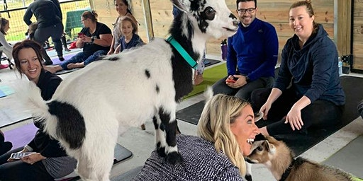 Goat Yoga Lakeland!