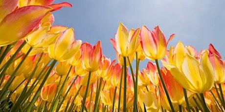Spring Equinox Purification: Mudras, Restorative Yoga and Sound Bath tickets