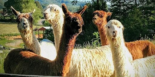 Sunday, June 14th, 2020 Alpaca Farm Visit