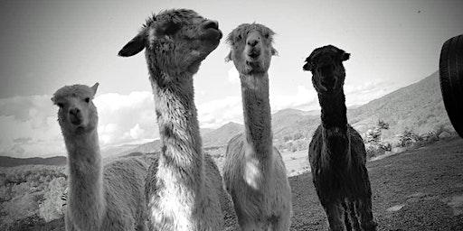 Sunday, June 28th, 2020 Alpaca Farm Visit