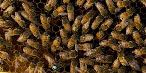 Beginning Beekeeper Classes