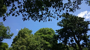 Wander for Well-being at Killerton