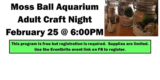 Moss Ball Aquarium~Adult Craft