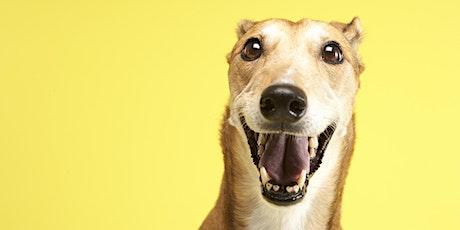 Pet Prep - Greyhound tickets