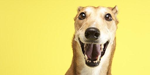 Pet Prep - Greyhound