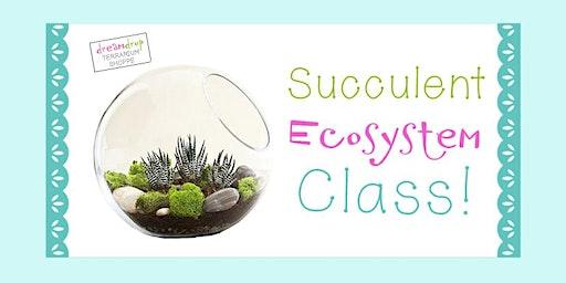 Succulent Ecosystem Class!