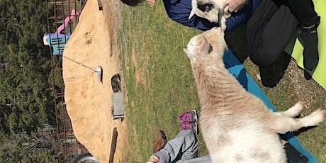 Carolina Goat Yoga Class: March 20th tickets