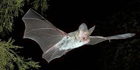 Bat Night tickets