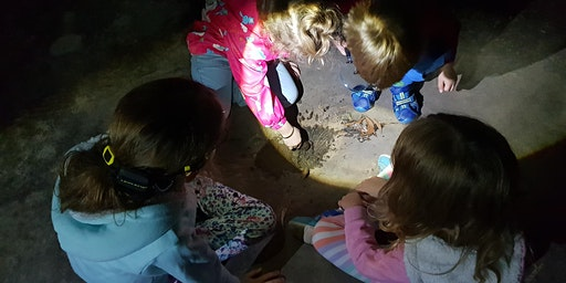 Nature at Night for Kids (Guided night bushwalk)